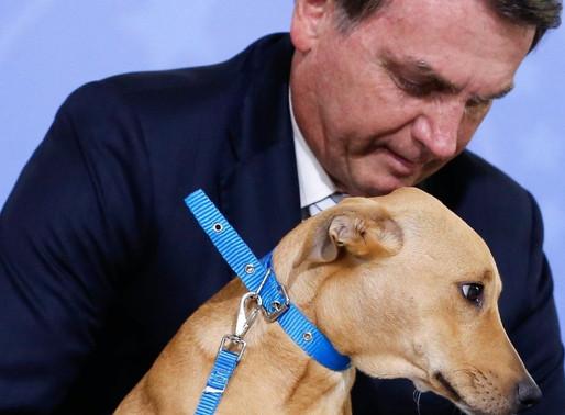 Bolsonaro sanciona, sem vetos, lei que aumenta pena para quem maltratar cães e gatos