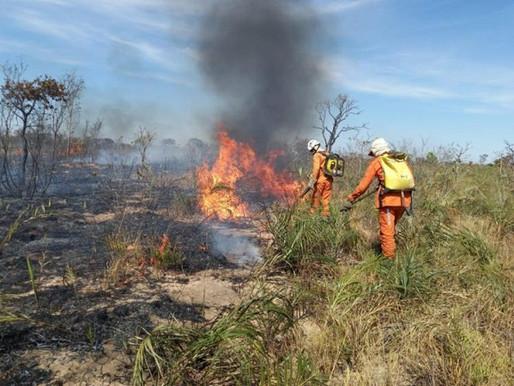 BA decreta situação de emergência por incêndio florestal; Campo Alegre de Lourdes está na lista