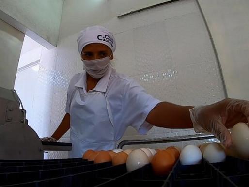 Economia: Entreposto de ovos em Massaroca pode integrar Sistema Brasileiro Inspeção