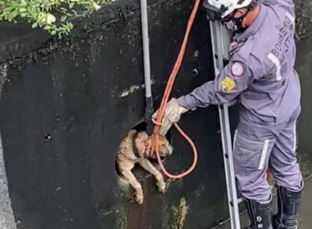 Cachorro preso em tubo de escoamento é resgatado