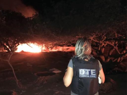 Durante ação da Polícia, grande plantação de maconha é destruída em Juazeiro.