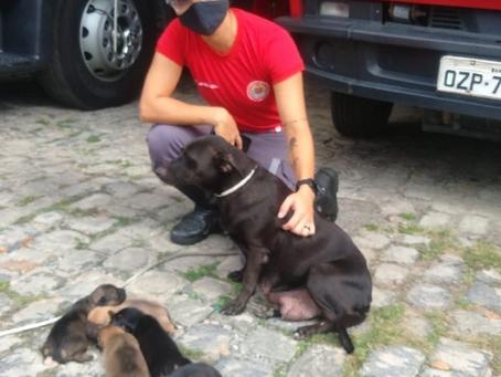 Bombeiros conseguem lares para filhotes de cadela resgatada