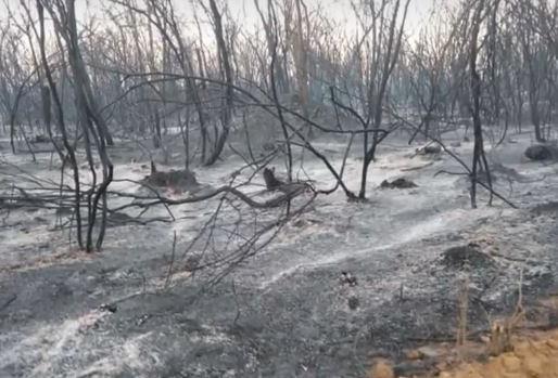 Região norte da Bahia continua sendo atingida por incêndios
