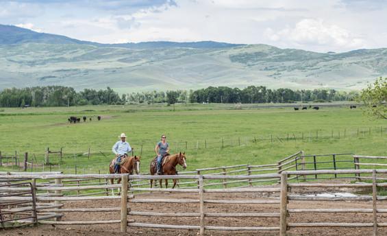 h-lazy-p-cows-Eric-Kalli-Riding (1 of 1)