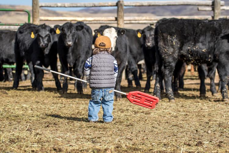 h-lazy-p-cattle-little-cowboy-fall-black
