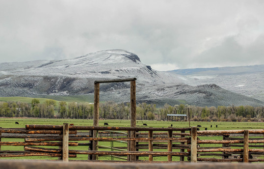 h-lazy-p-cattle-ranch-early-spring.jpg