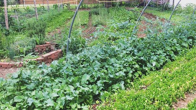 Home Organic Garden Consultation