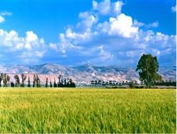 שדות החיטה עם נוף הגלעד