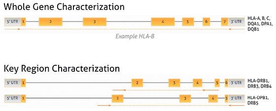 Whole-Gene-and-Key-Region-Characerizatio