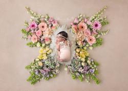 butterfly11newlogo