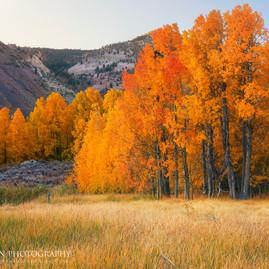 Autumn Morning Bishop Creek