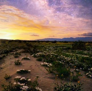 Milky Way over Wildflowers