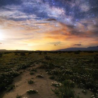 Milky Way Super Bloom