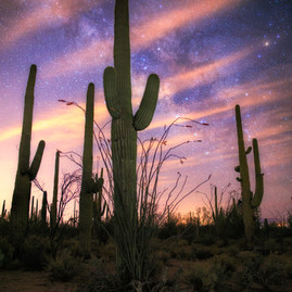 Saguaro National Park at Night