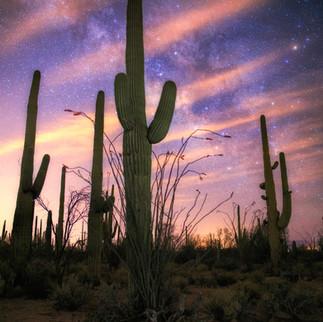 Saguaro National Park at Night