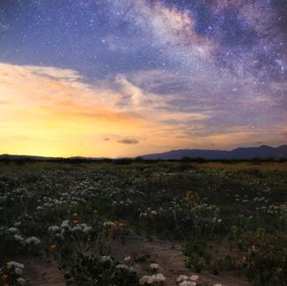 Anza-Borrego Milky Way