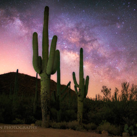 Giant Saguaro and the Night Sky