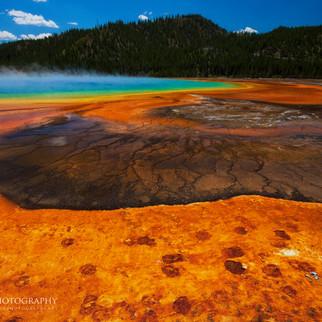 Yellowstone Bison Tracks