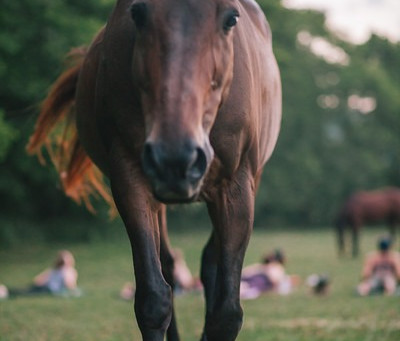 How Horses Heal Our Emotional Wounds