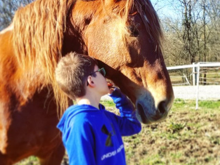 The Healing Power of Horses: How Equine Therapy Benefits Veterans, Victims of Abuse & More