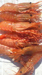 Prince William Sound shrimp.jpg