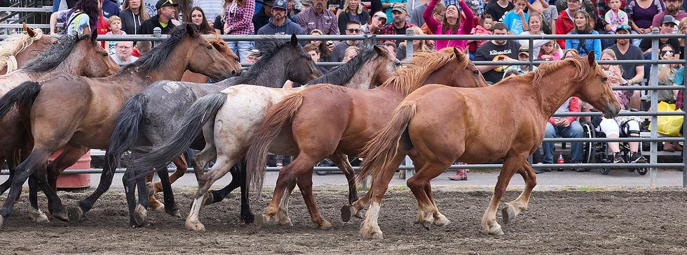 Enumclaw-2021-Fair-Rodeo_97A3259.jpg