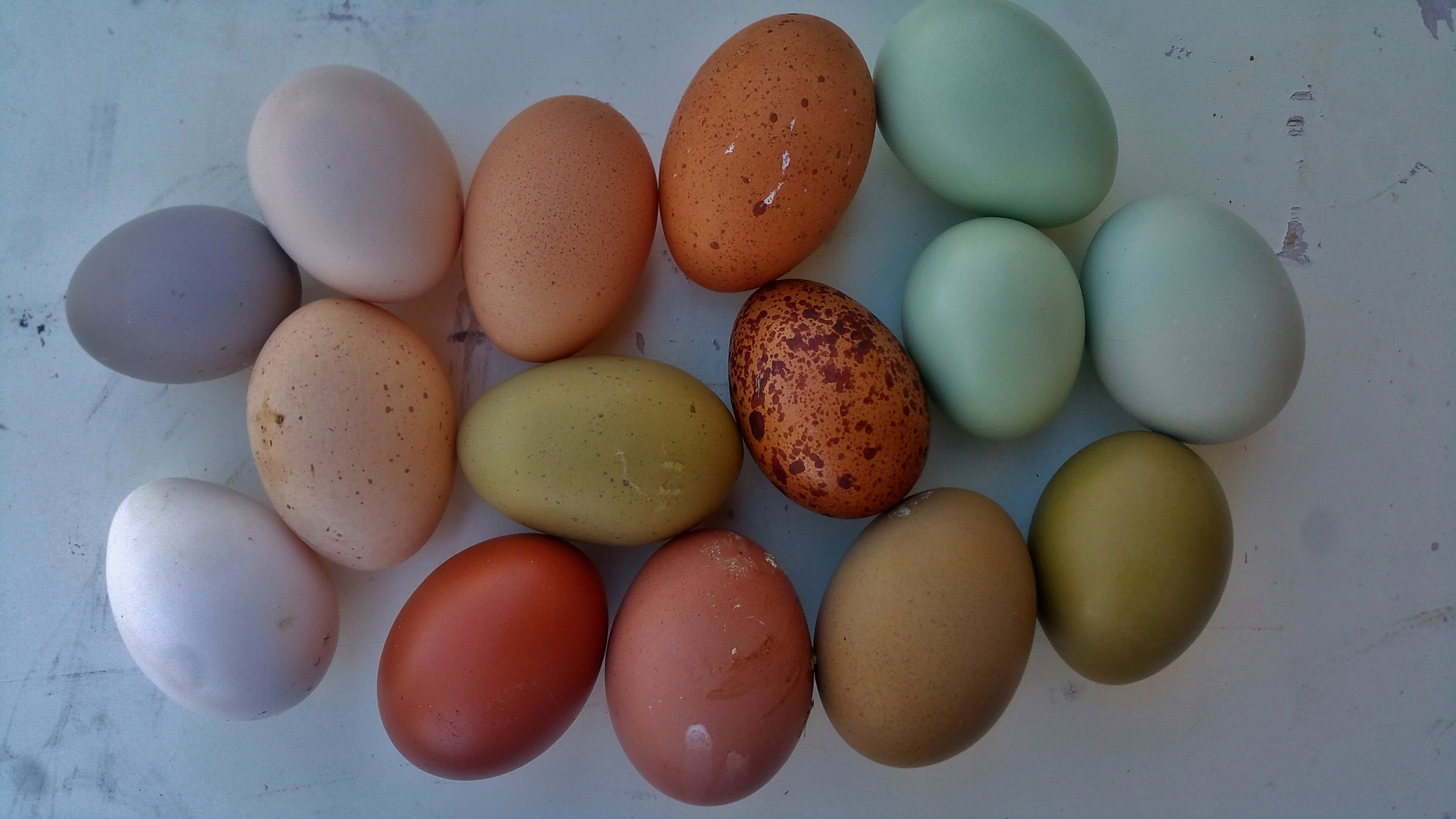 Eggs with new gray egg 2016-02-15 15.20.00