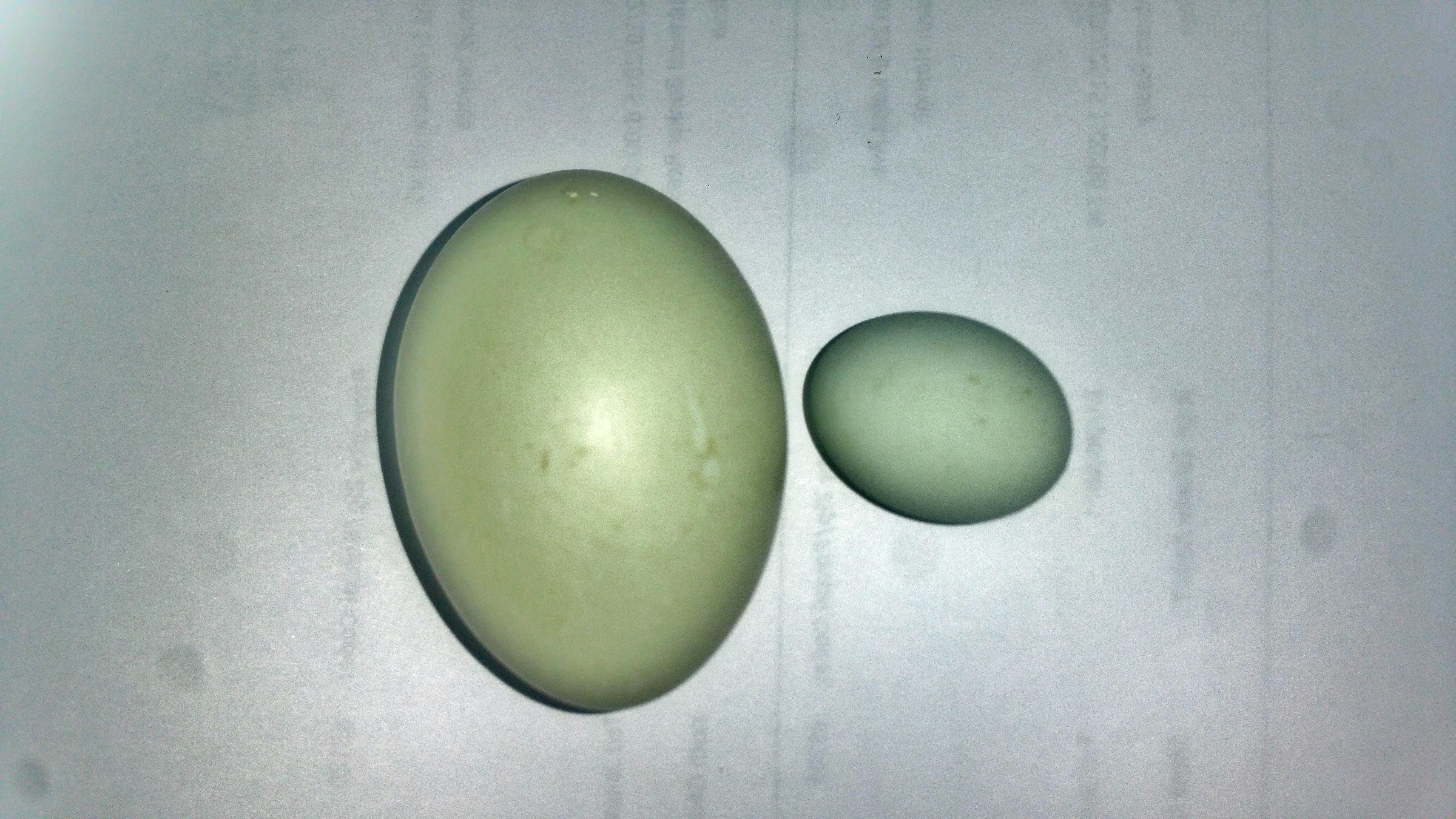 Duck Fairy Egg 2016-03-02