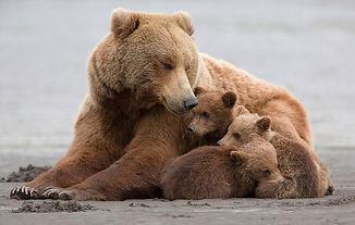 mother-bear-cubs-animal-parenting-53-57e