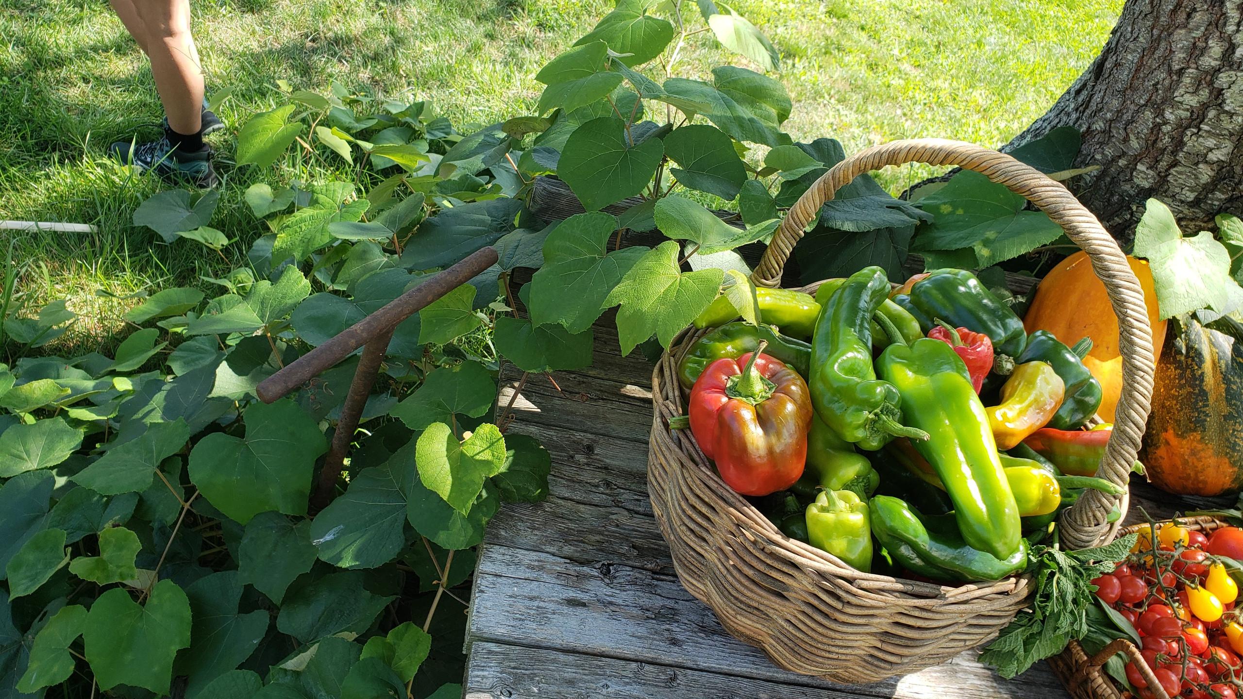 Recent harvest