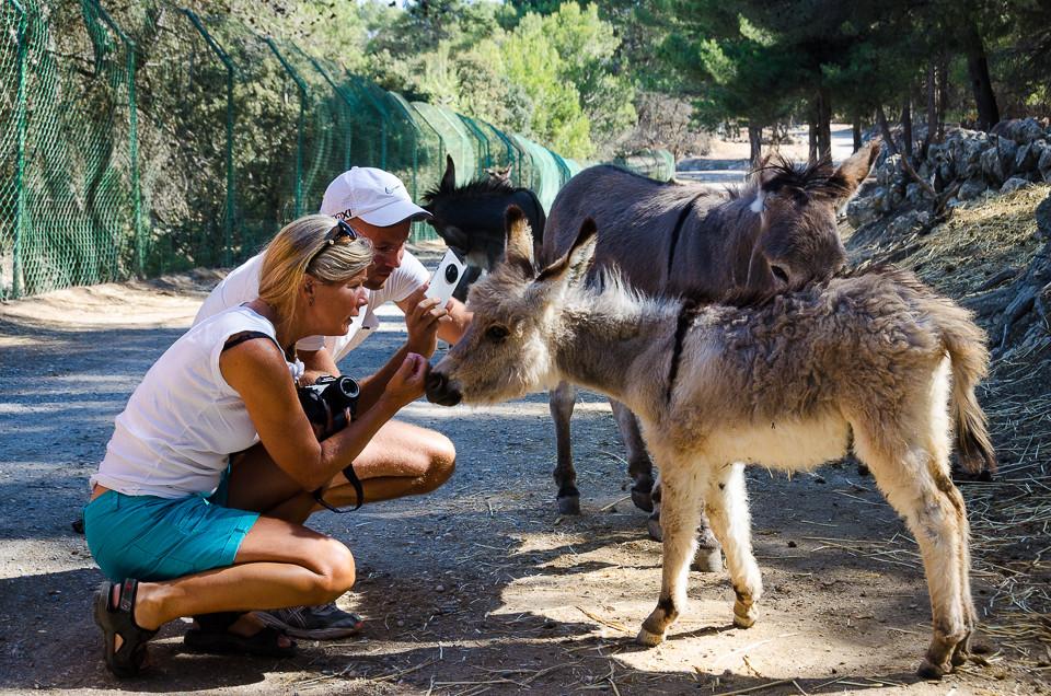 Besøkende hilser på esler i Aitana Safari i Spania