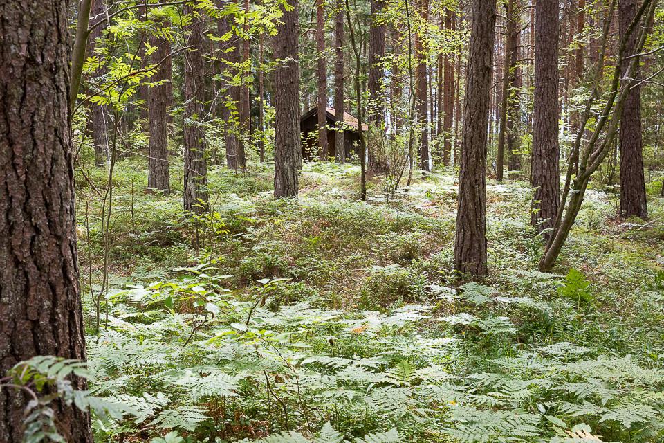Liten hytte i skogen på Saltö