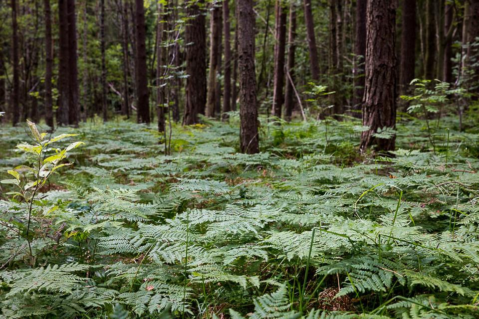 Skogsbunn på Saltö