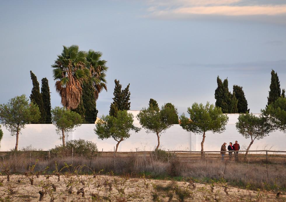 Hvit mur med trær