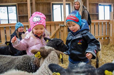 Children withe sheep in the Nordens ark - animal zoo in Västra Götaland in Sweden.jpg