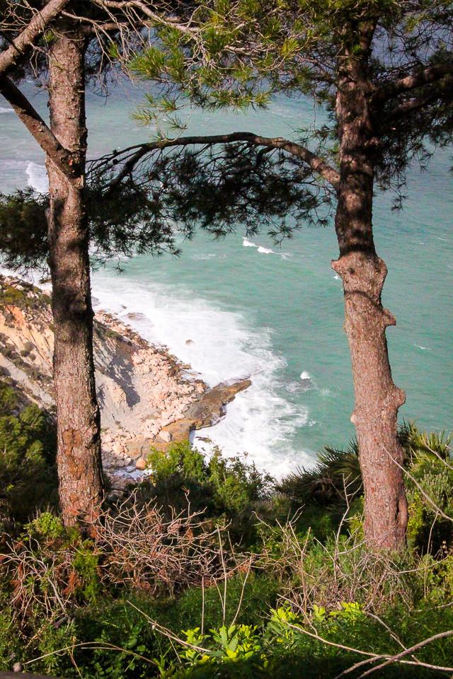 Utsikt til sjøen mellom bartrær