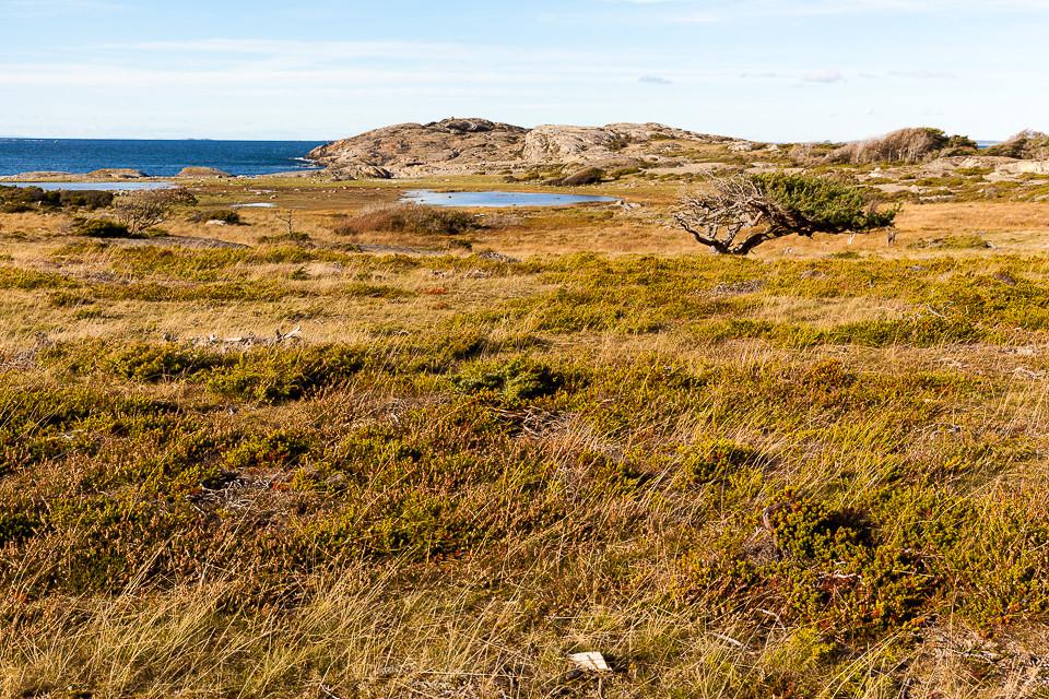 Savannelignende område på vestsiden av Nord-Koster