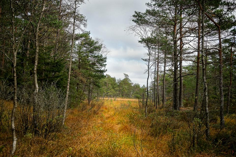 Glenne med høstfarger i skogen ved Bjørnerødpiggen