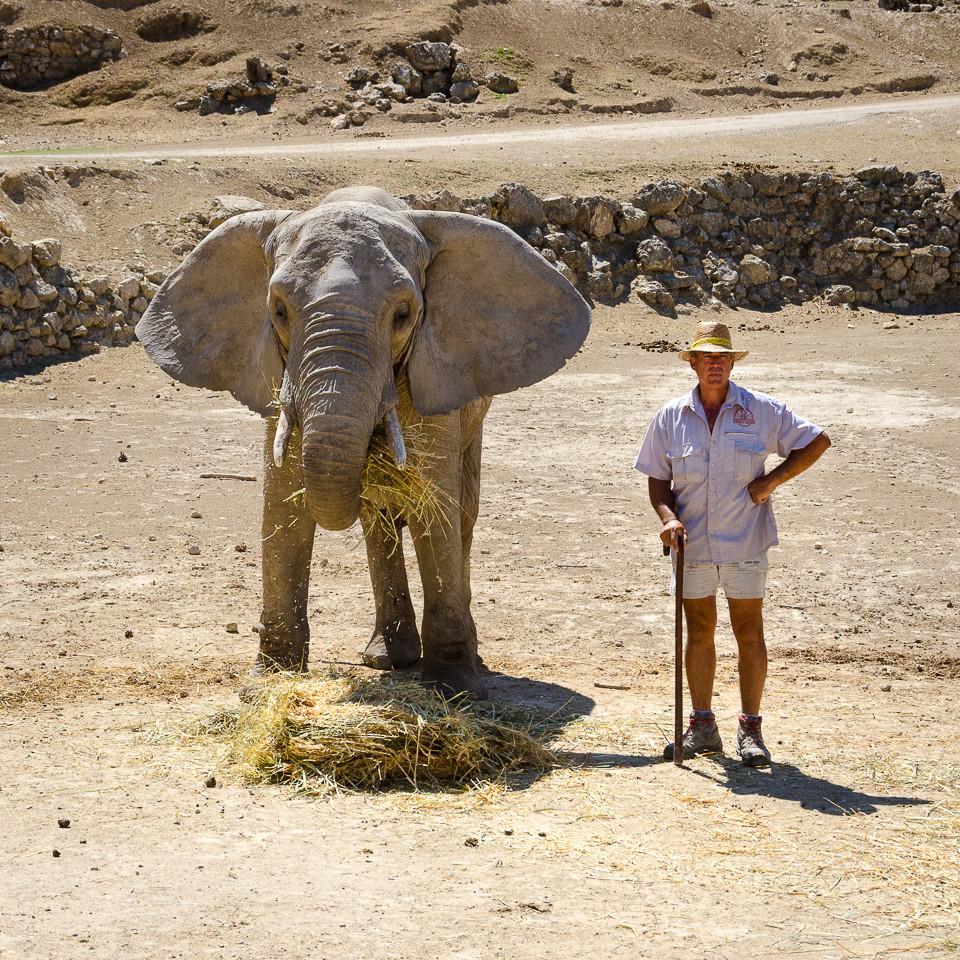 Elefant med dyrepasser i Aitana Safari i Spania