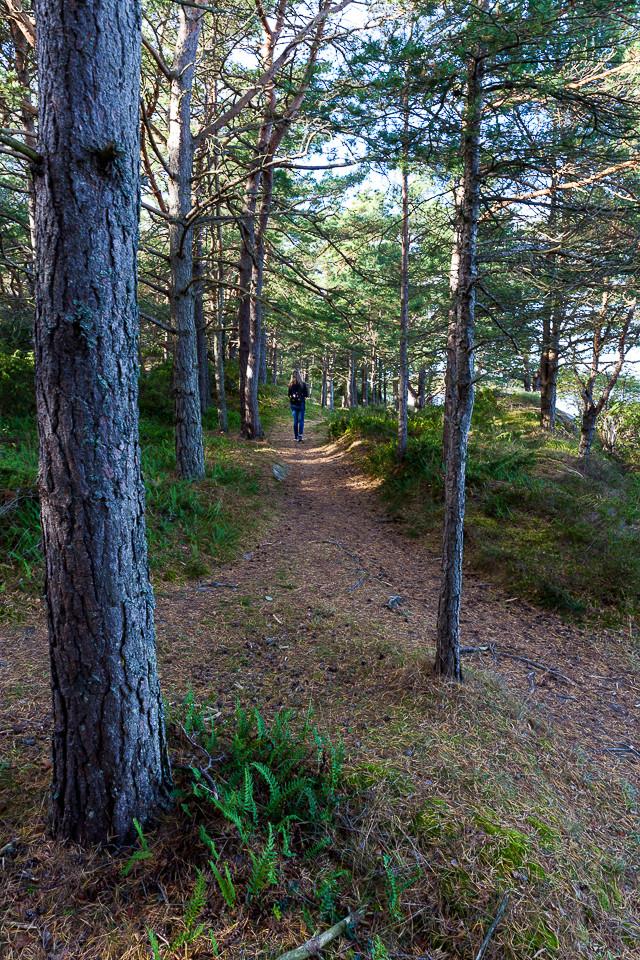 Sti i skogen på Nord-Koster