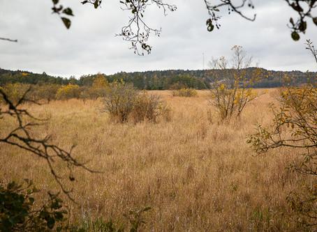 Strømsvannet - a forgotten wetland