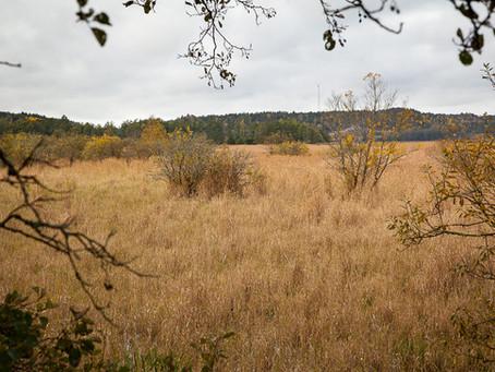 Strømsvannet - una zona pantanosa olvidada