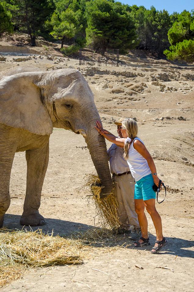 Besøkende klapper elefant i Aitana Safari i Spania