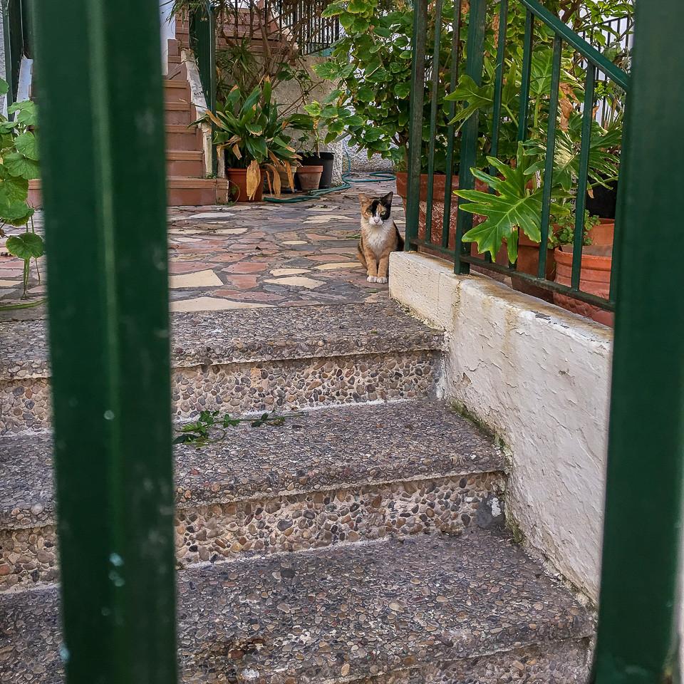 Katt i bakgate i Benidorm