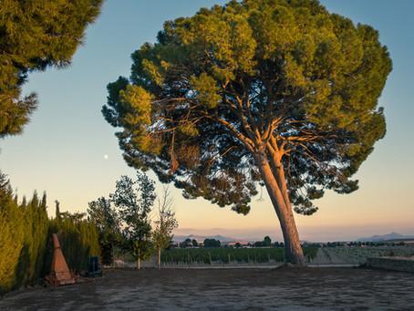 Villena - grape harvest and visit to bodega