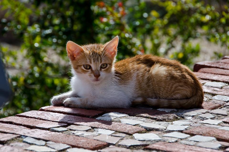 En av kattene på Santuario Santa Maria Magdalena