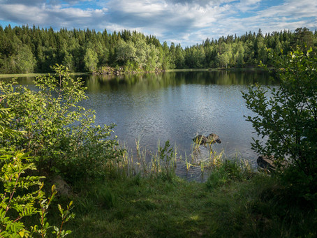 Niskinnvann - idyllic pond in the woods