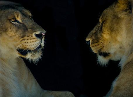 Aitana safari - get close to wild animals