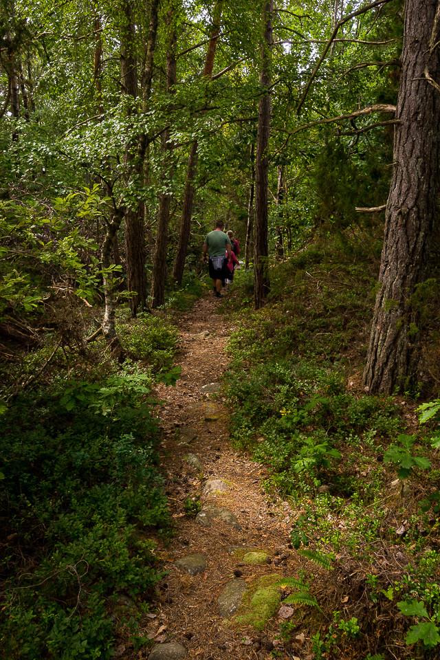 Sti gjennom skogen til Sveriges vestligste punkt