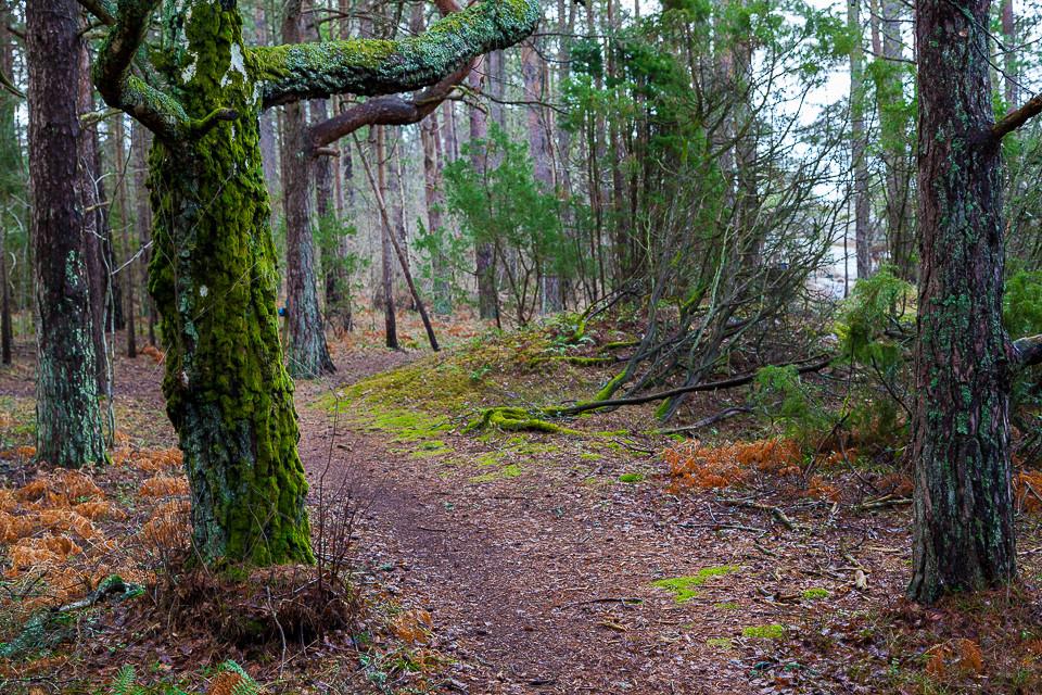 Grønne partier i skogen på Nøtholmen ved Strømstad